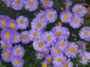 Autumn Flower Display